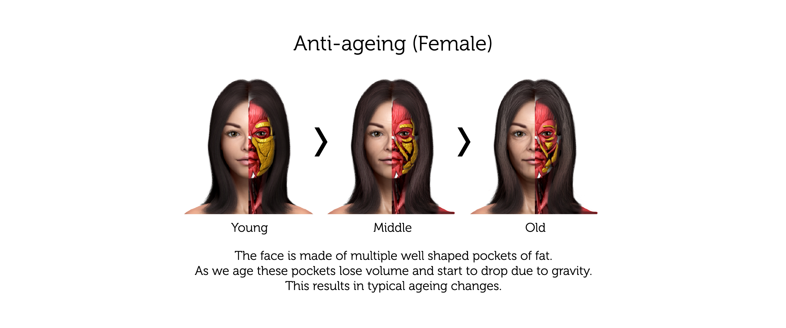 New Anti-Ageing (Female)-01